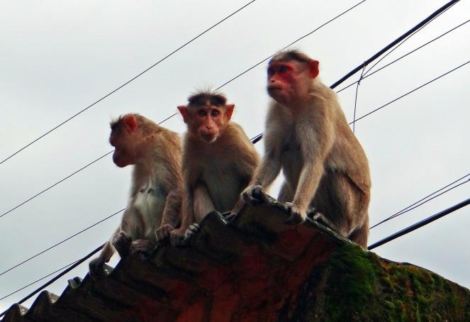 monkeys-179274_1280