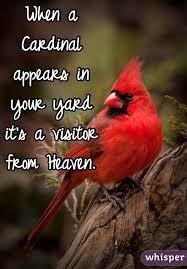 red-cardinal-postcard