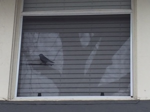 bird-on-window
